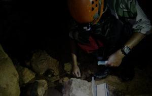 Riset biota gua